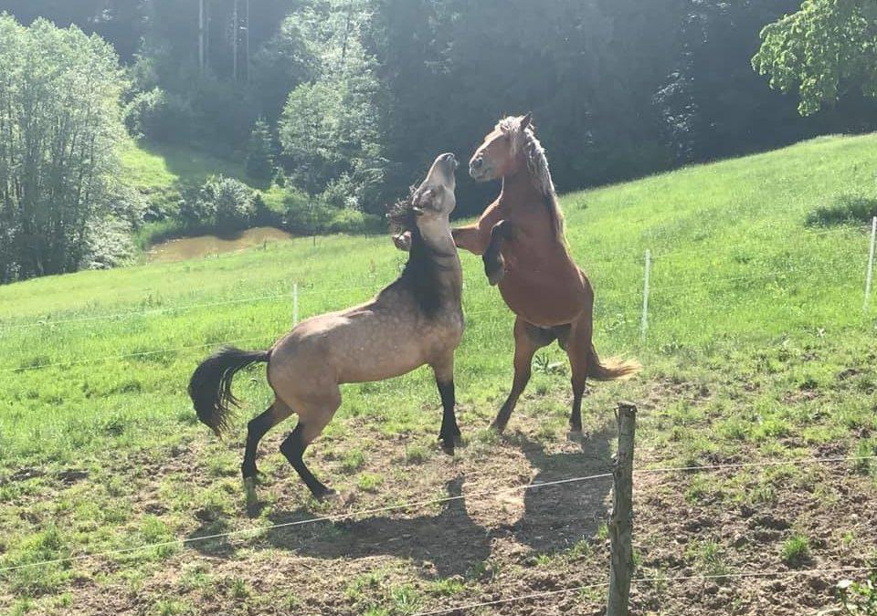 Was mein Pferd mich über Führung gelehrt hat